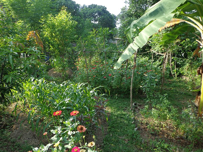 metta garden